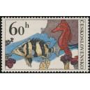 2142 - Okounovec malošupinatý a koník mořský