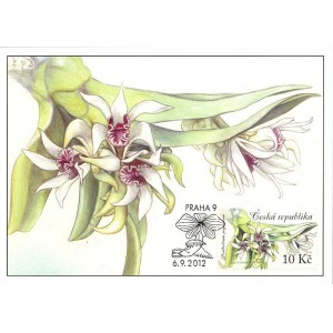 CM085-CM088 - Krása orchidejí